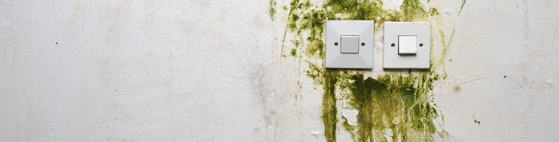 Control Moisture and Mold in Your Home | Blog | Mold Off®