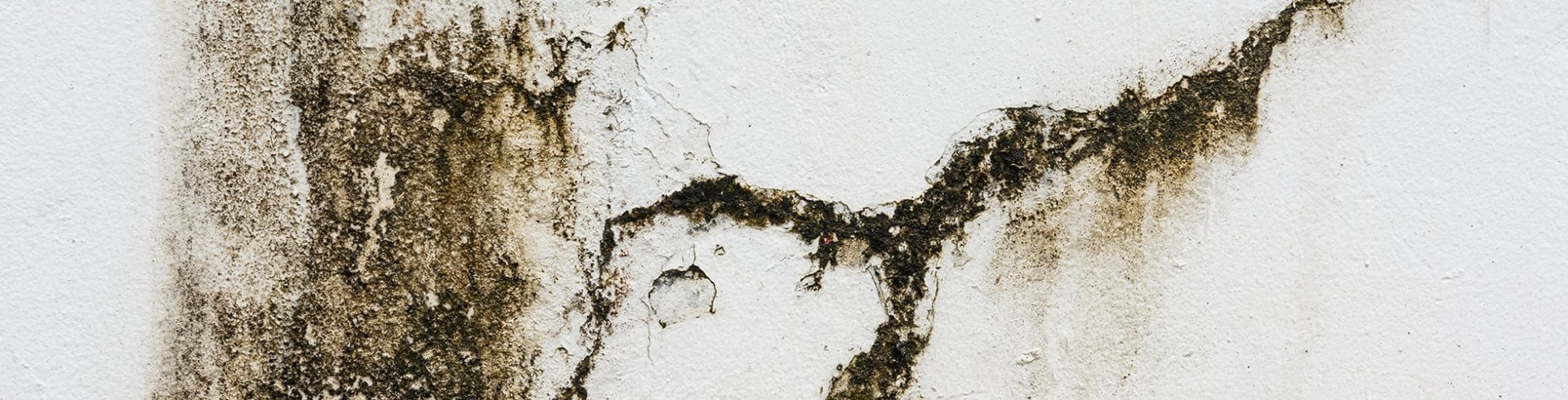 Preventing Mold in High Traffic Areas | Blog | MoldOff®