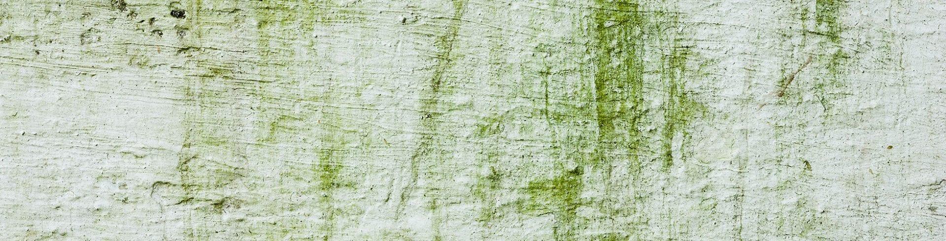 Mold Removal on Concrete, Brick & Driveways | Blog | MoldOff®