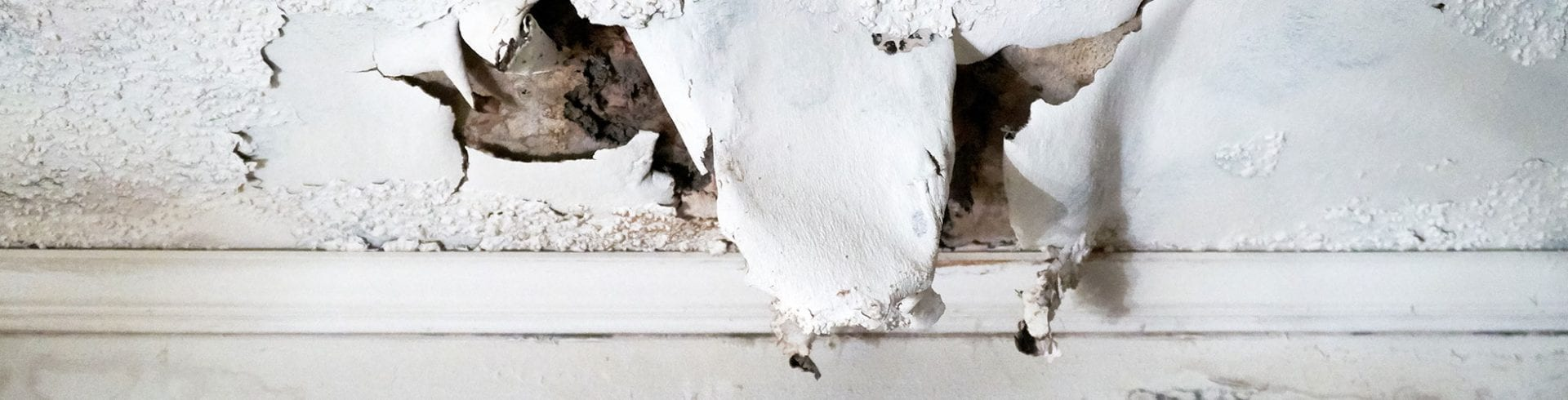 Tips & Tricks: Flooding and Mold | Blog | Mold Off®