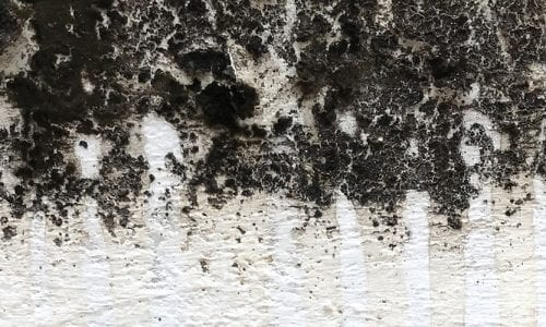 Indoor Mold is a Major Health Concern | Blog | Mold Off®