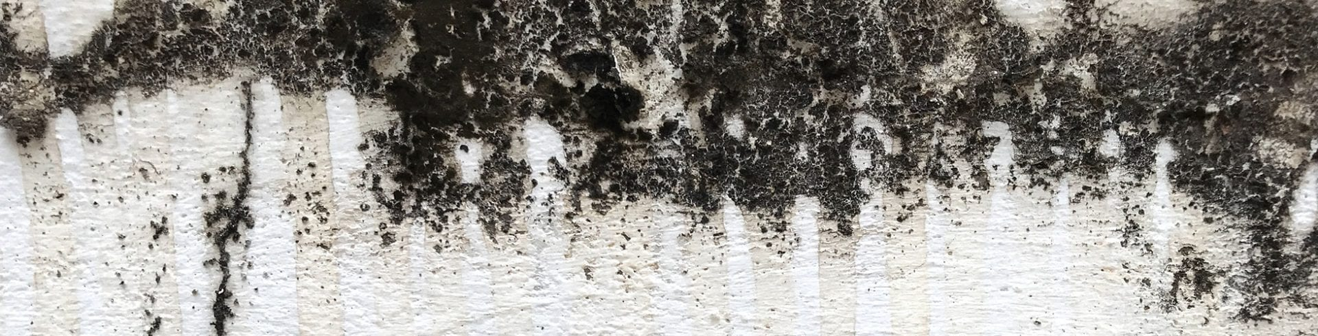 Indoor Mold is a Major Health Concern | Blog | MoldOff®