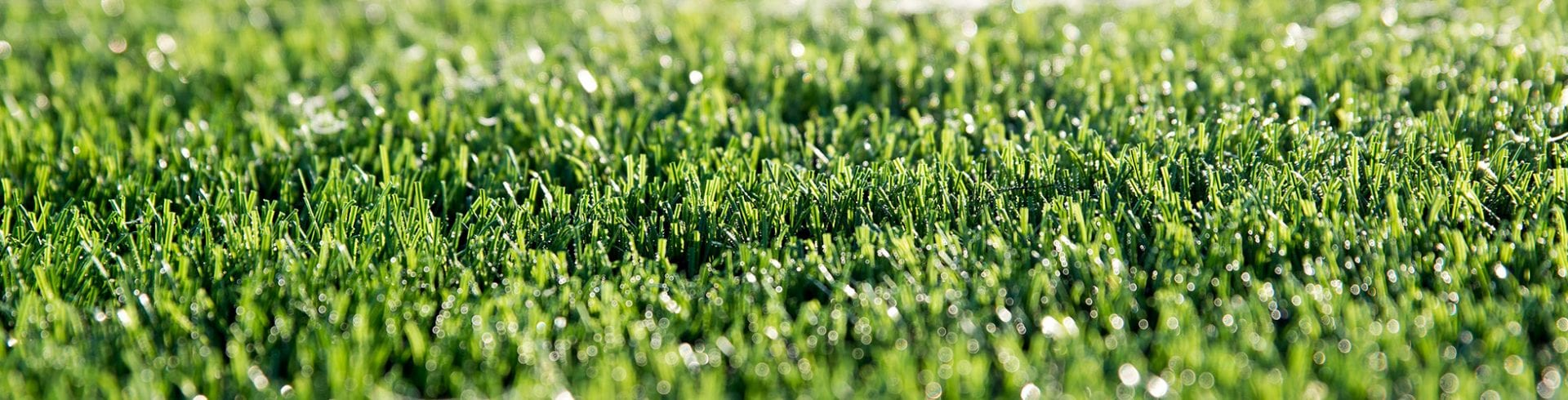 Tips & Tricks: Combat Mold on Artificial Turf | Blog | Mold Off®