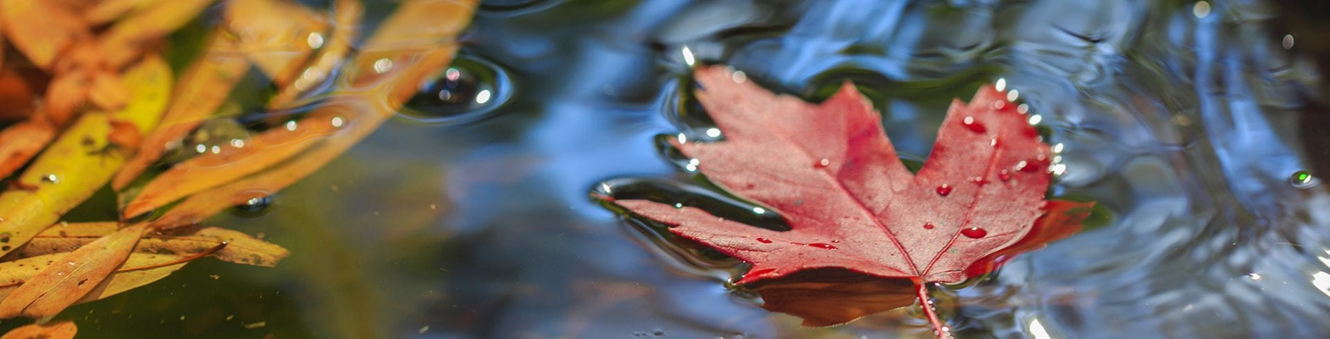 Tips & Tricks: Fall Leaves Spawn Mold Spores | Blog | Mold Off®