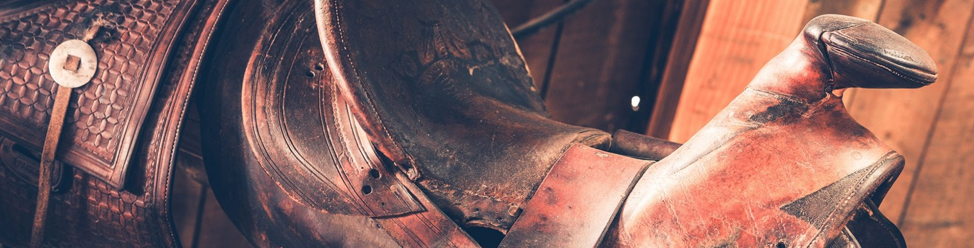 Remove Mold from Saddles and Tack | Blog | MoldOff®